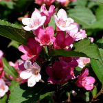 Фото 10: Розовые лепестки