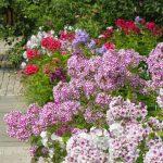 Фото 22: Богатый выбор цветов