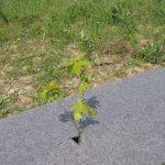 Фото 39: Геоткань для растений