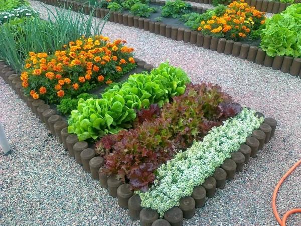 Полезные растения и цветы в одной клумбе