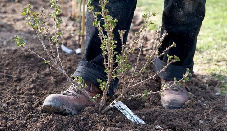 Разрыхление почвы