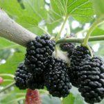Фото 32: Вкусные плоды
