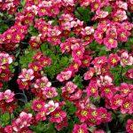 Фото 59: Ярко розовый цветок