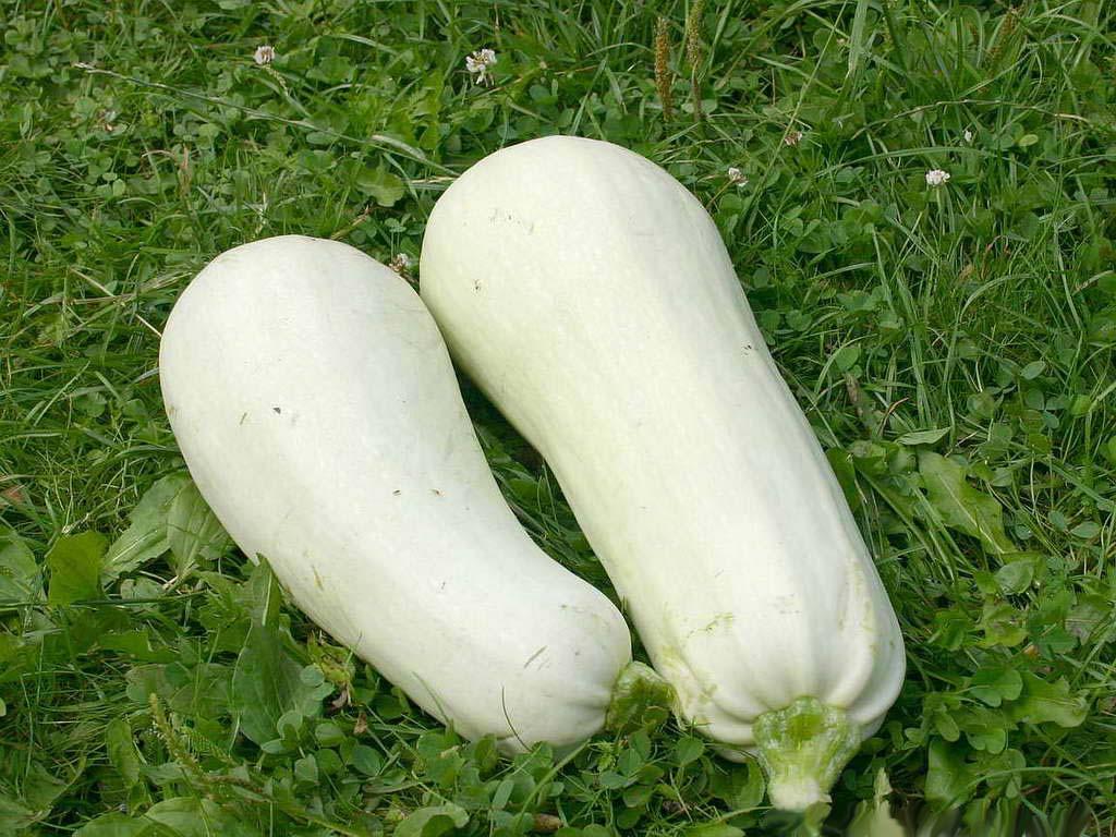 Ультраранний сорт Белый