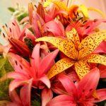 Фото 59: необычный букет из лилии