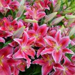 Фото 48: садовые цветы