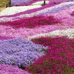 Фото 43: поле цветов