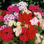 Фото 45: Разноцветные цветы
