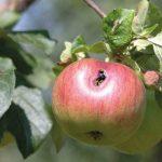 Фото 14: Больной плод