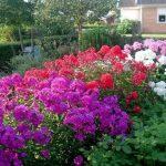 Фото 53: Садовые цветы