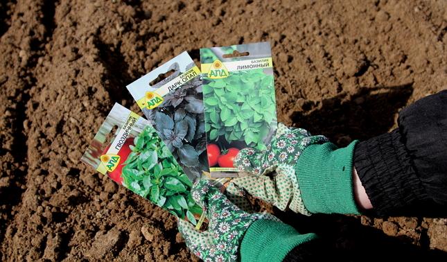 Сажаем базилик правильно - выбираем семена