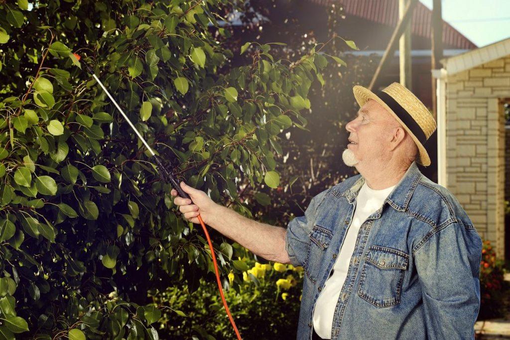 Борьба с гусеницами в саду