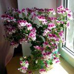 Фото 1: Комнатный цветок