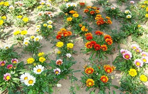Как растут цветы в саду