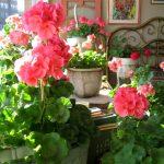 Фото 12: Цветы в декоре комнаты