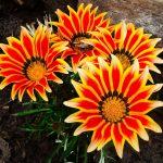 Фото 13: Шикарные цветы для букета
