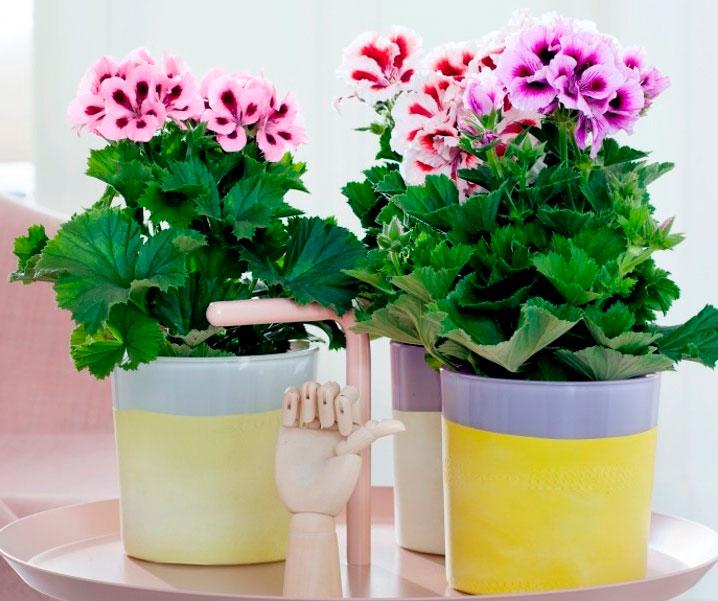 Чудо цветы