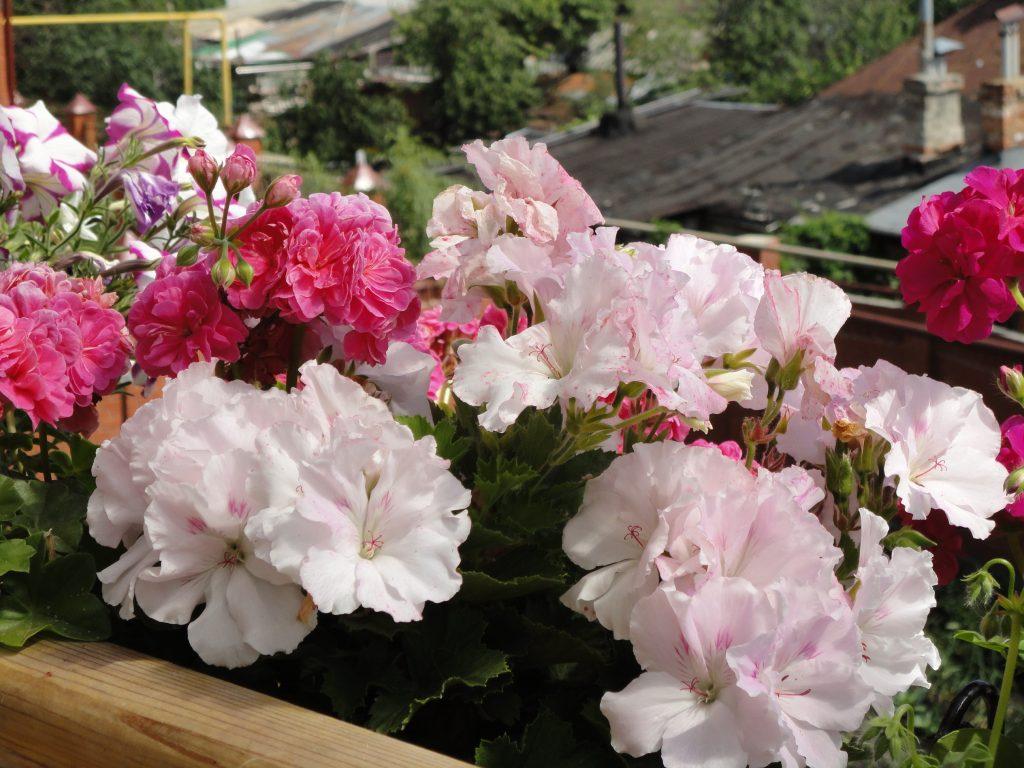 Размножение цветка в домашнихт условиях