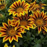 Фото 10: Посадка и уход за цветами