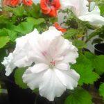 Фото 18: Белый цветок