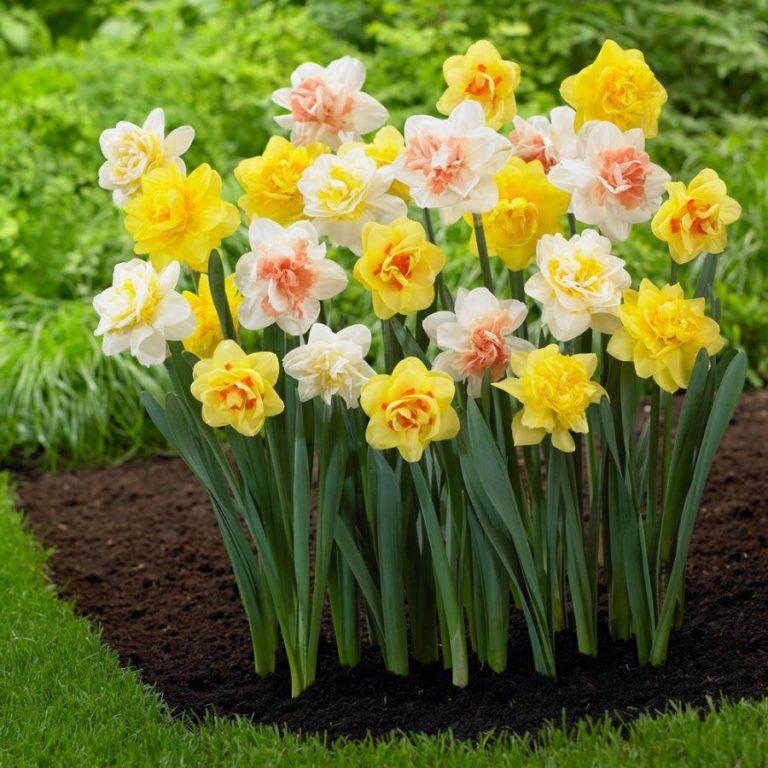 Прекрасные цветы в саду