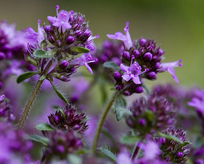 Прекрасные лечебные свойства травы