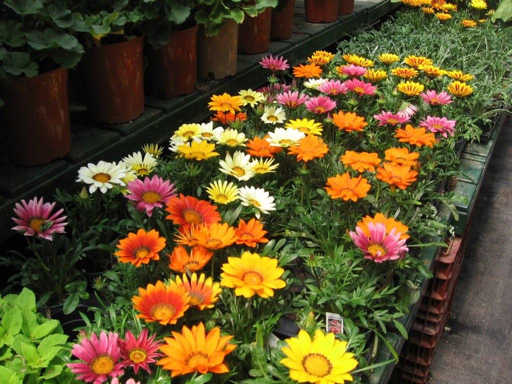 цветник на садовом участке