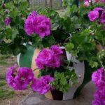 Фото 19: Цветы в горшке
