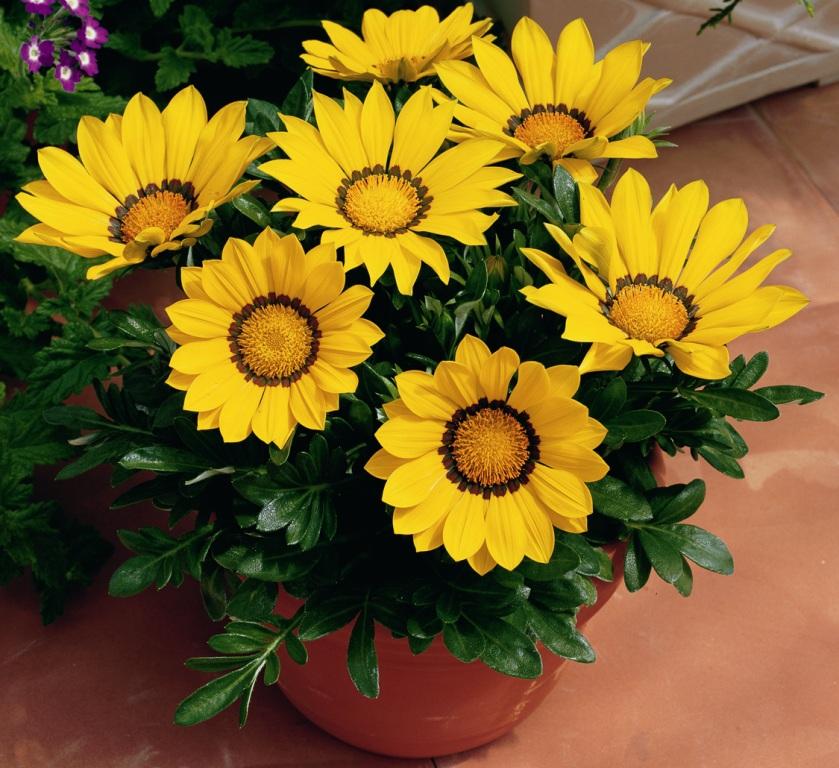 Выращивание цветка дома