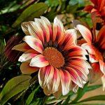 Фото 24: Прекрасное соцветие