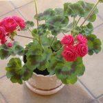 Фото 26: Горшок с цветком