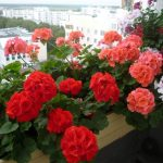 Фото 27: Цветы на подоконнике