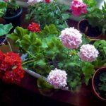Фото 29: Домашние цветы