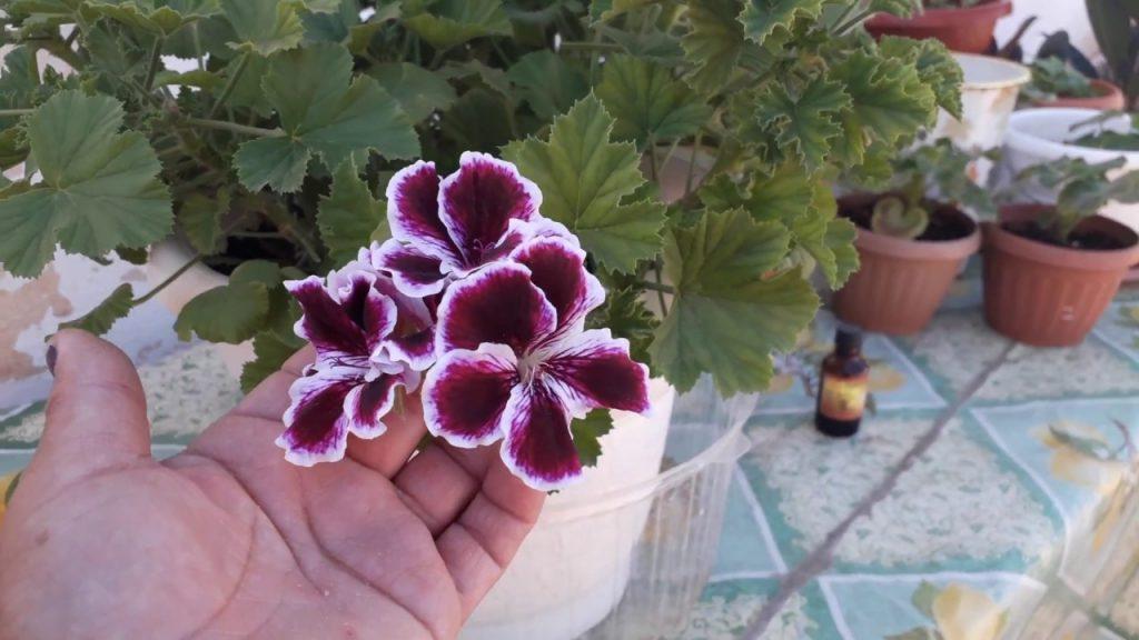 Уход за домашними цветами