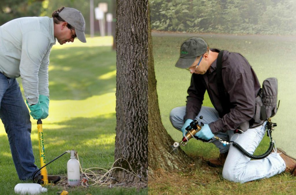 Летняя обработка деревьев