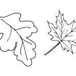 Фото 42: Трафареты осенних листьев