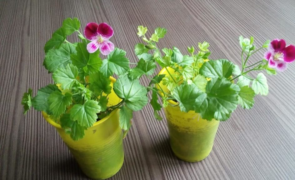 Выращивание цветка