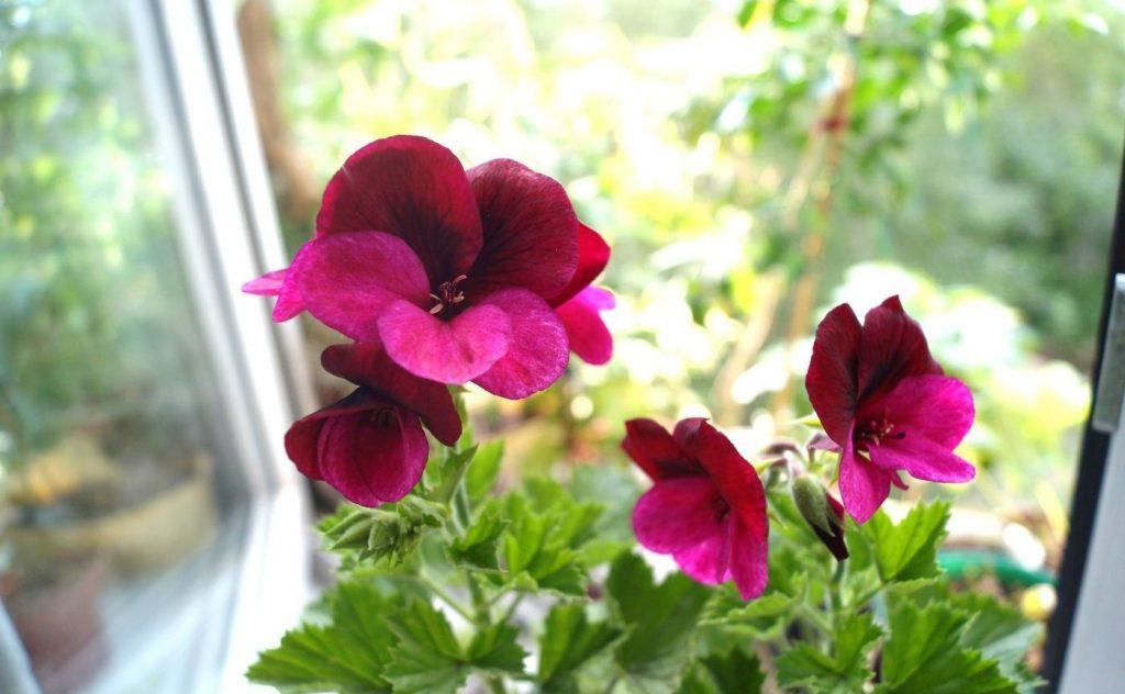 Королевский цветок