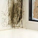 Фото 2: Плесень на пластиковых окнах