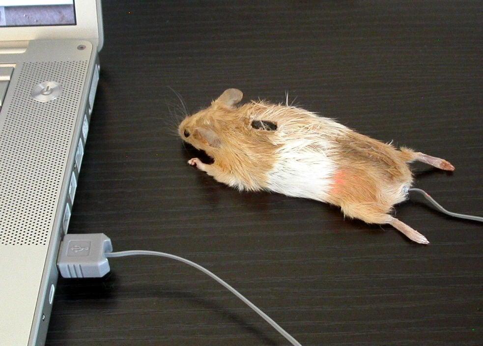 Компьютерная мышка в виде мышки