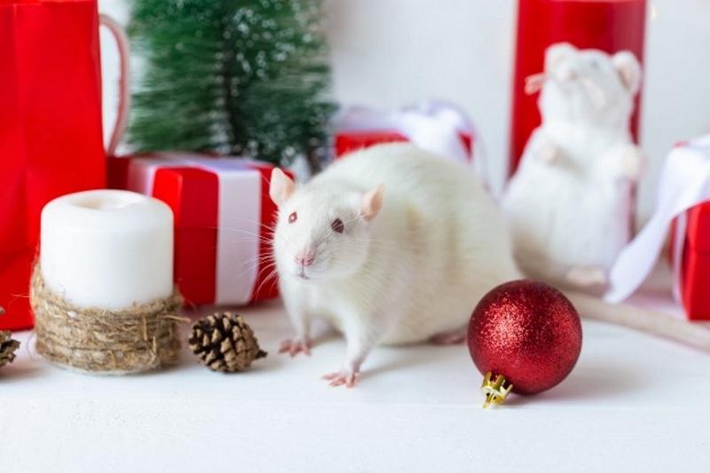 Белая Крыса – символ Года
