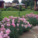 Фото 16: Гвоздика садовая