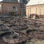 Фото 40: Подкормка винограда