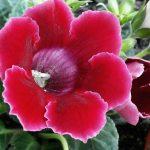 Фото 2: Цветок