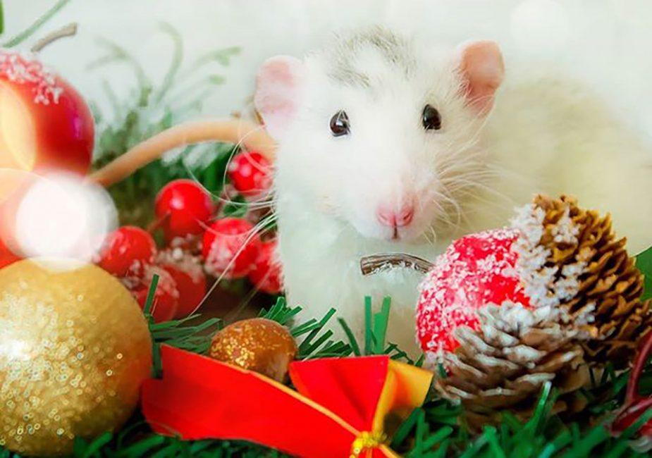 Белая Металлическая Крыса