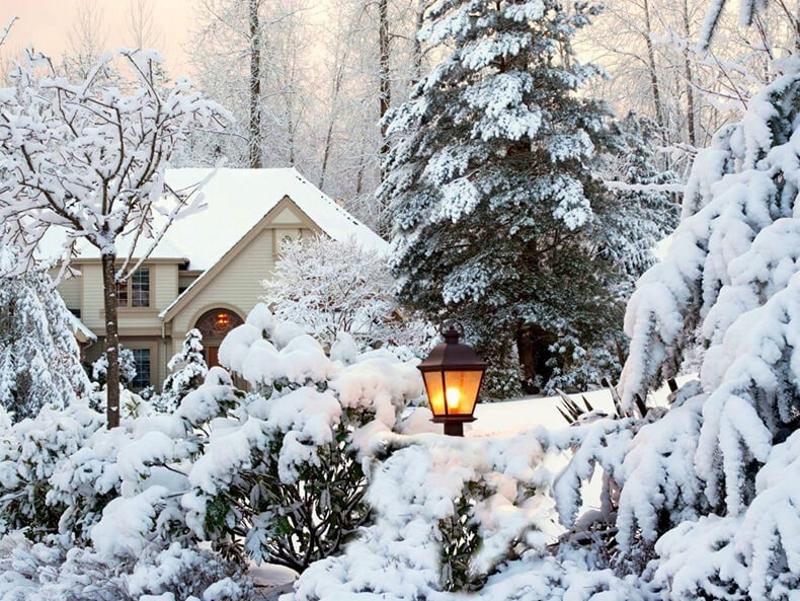 Зимний загородный сад
