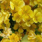 Фото 32: Жёлтые сорта