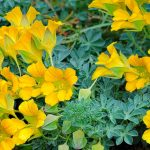 Фото 2: Жёлтые цветы