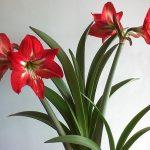 Фото 28: Комнатные цветки