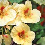 Фото 57: Сорта фото цветов